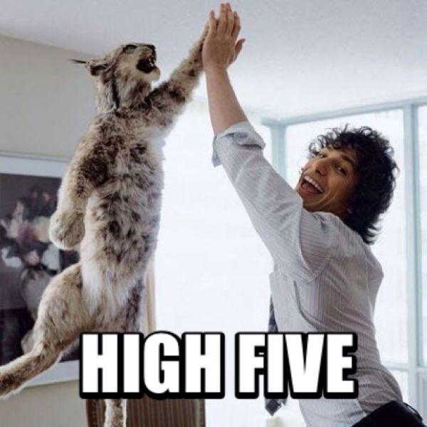 Funny Animal High Five Meme