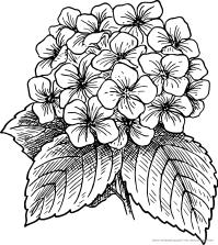 ausmalbild-malvorlage--Blumenstrauss--571--ausmalbilder ...