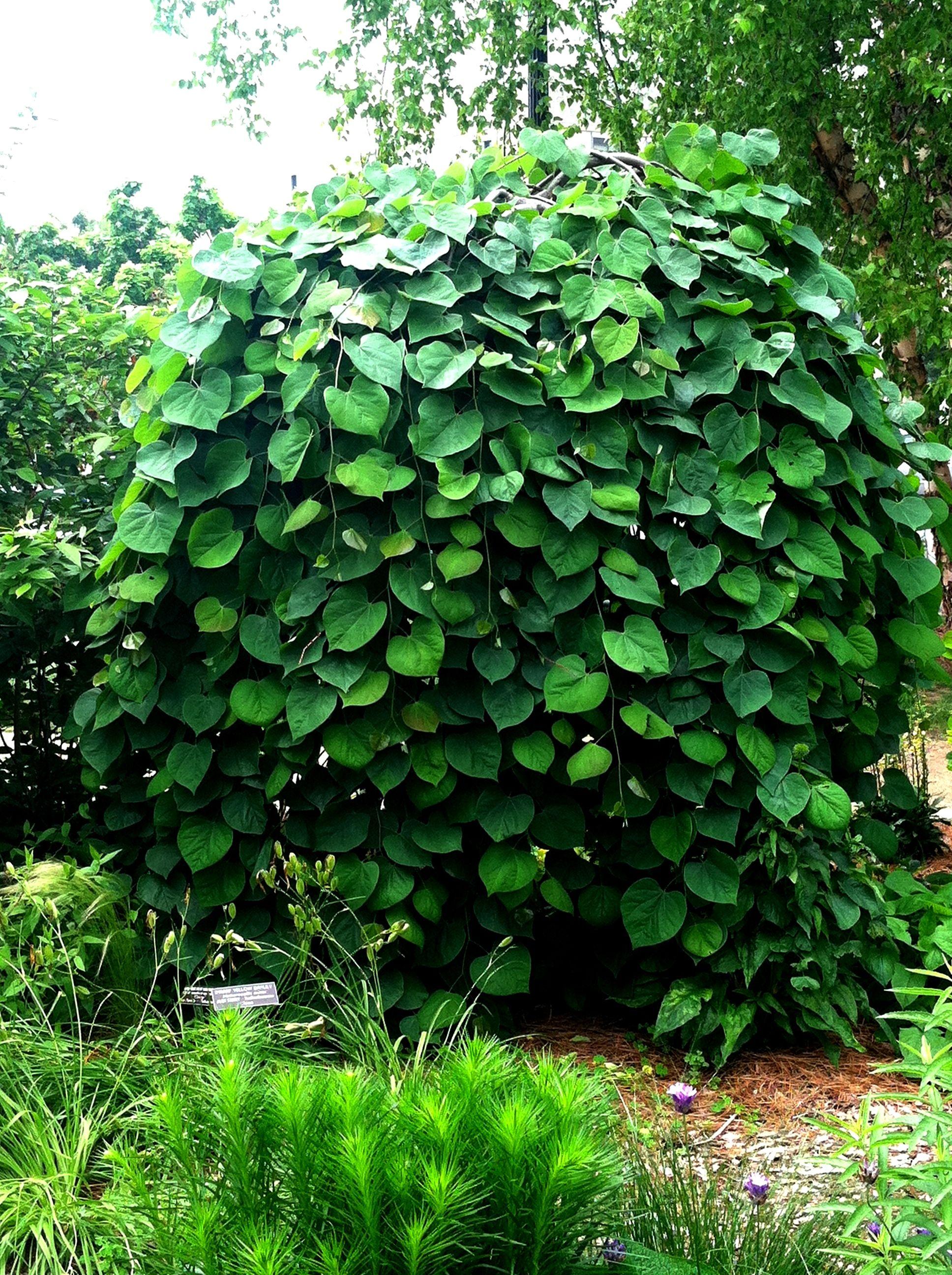 Backyard Container Gardening Ideas