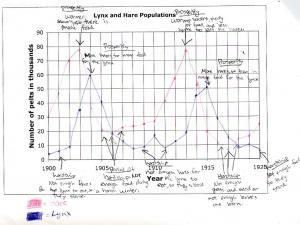 One student's hare & lynx population graph.. Good activity