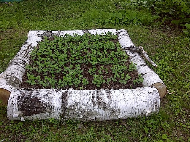 Beautiful Raised Beds Made By Repurposing A Fallen Tree I Love This I