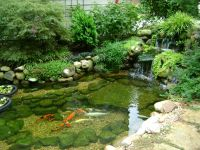 Koi Ponds Dont Need to Look Like Black Liner Pools
