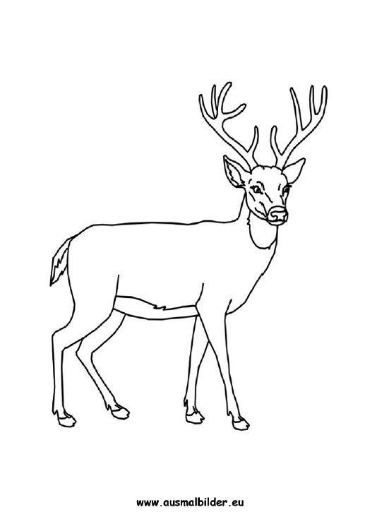 Ausmalbild Hirsch Zeichnen Pinterest Hirsche