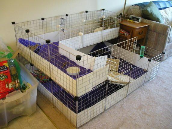 Homemade Guinea Pig Cages Ideas Guinea Pig Homemade Cage Ideas