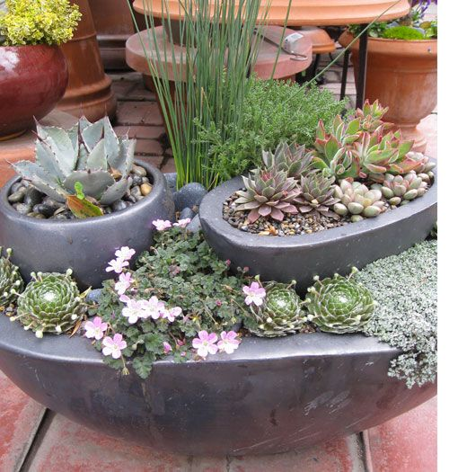 Succulent Gardens For Small Spaces Gardens Container Gardening