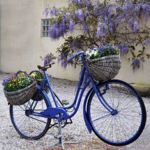 Blue Bike Print Wrapped Canvas Tanners