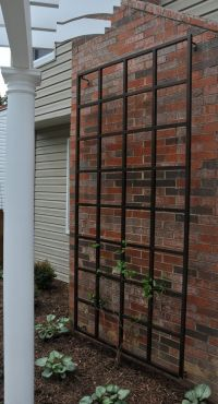 Metal Vine Wall Trellis Pictures to Pin on Pinterest ...