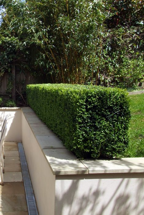Retaining Wall Hedge Yard Pinterest Drain Hedging And Extras