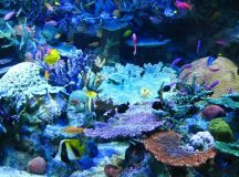 real photos of sealife with coral | Beautiful Coral Reef ...