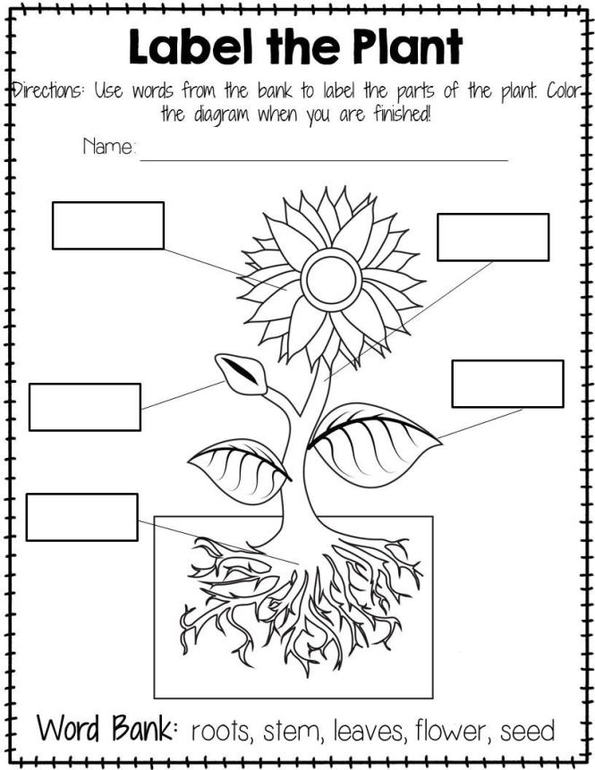 100+ [ Labeling Plants Worksheet ] | Eating The Parts Of A Plant ...