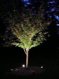 Tree Uplighting Ideas | Lighting Design Ideas | Pinterest ...