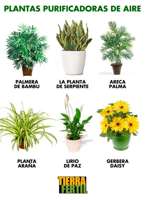 La nasa recomienda 5 plantas para purificar el aire del for Plantas de purificacion