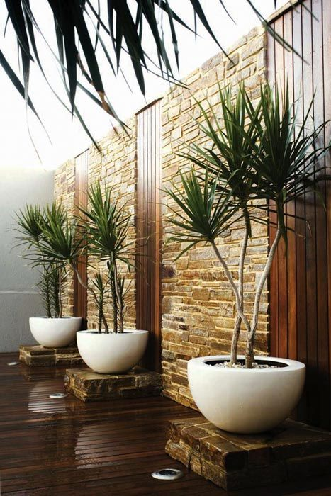 Trends Woody Plants In Containers A Great Entry Pathway That