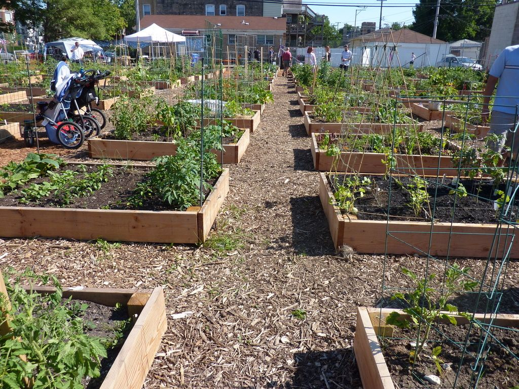 Community Garden Design Chicago's Urban Farming Movement In A