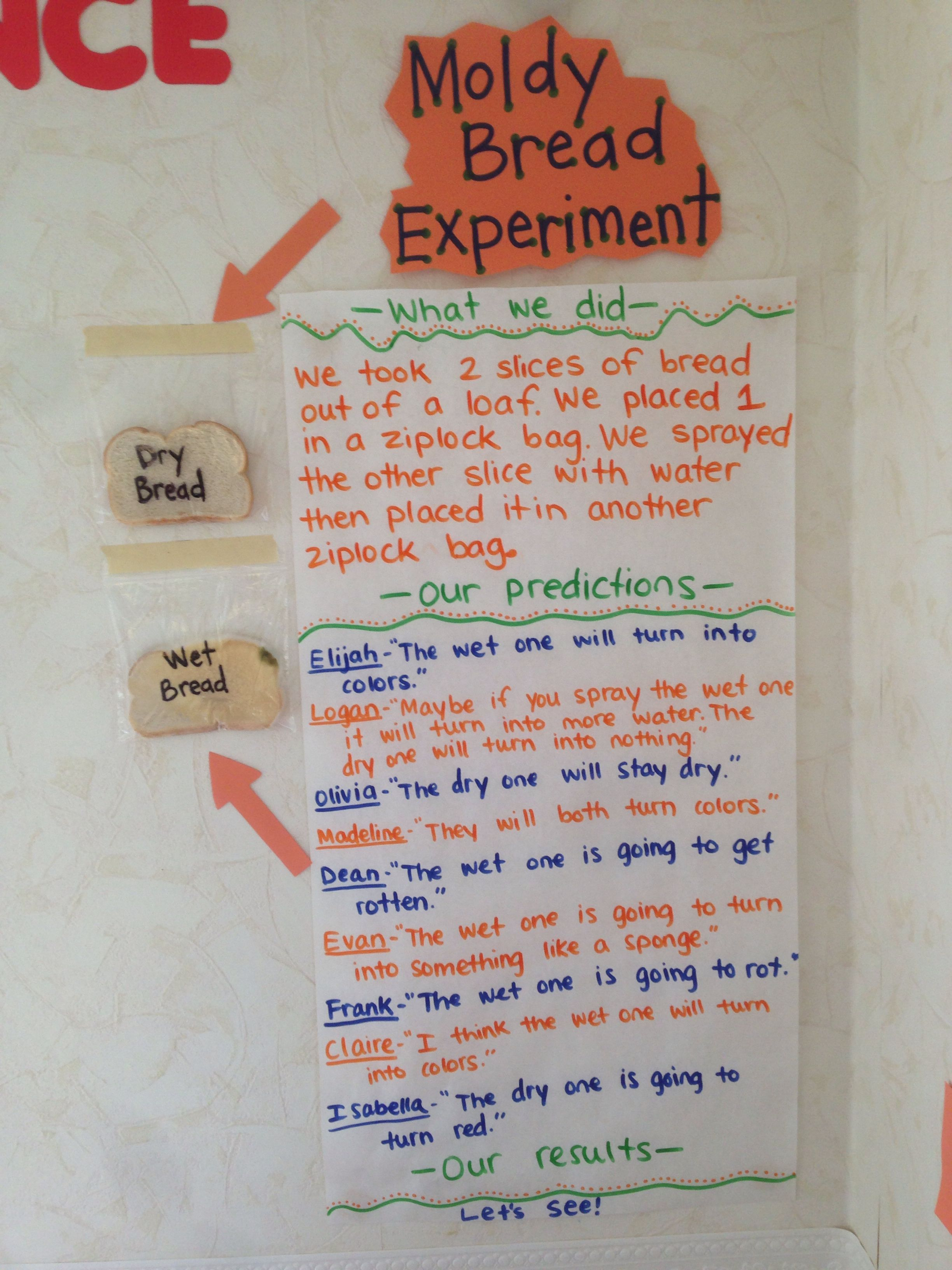 Moldy Bread Experiment Children Observed Two Pieces Of