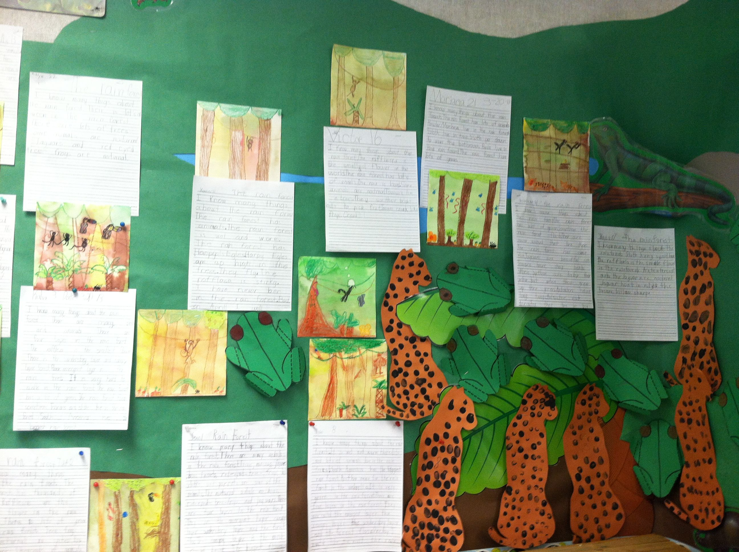 First Grade Rainforest Science Unit Reports And Art