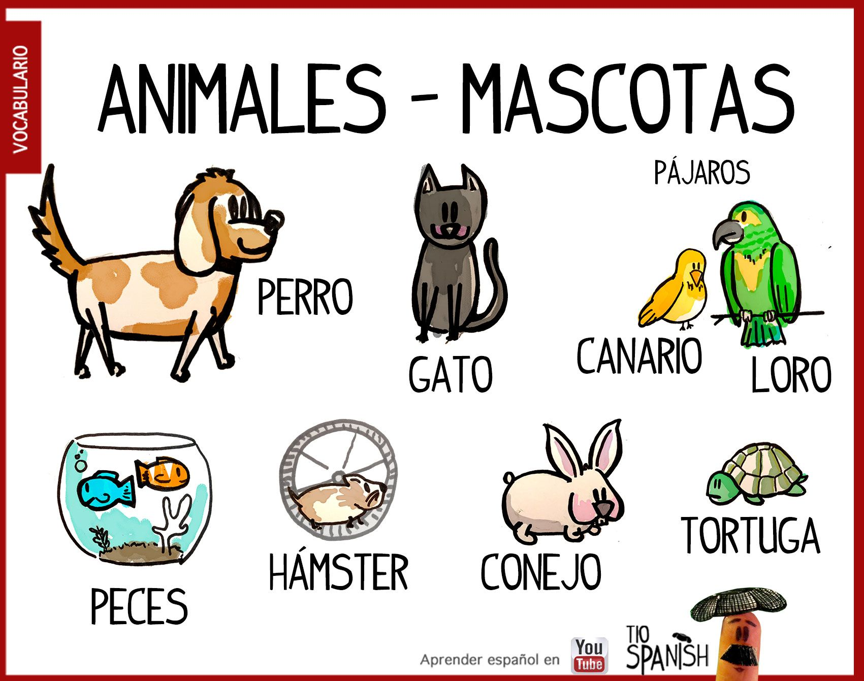 Nombres De Aves En Espanol