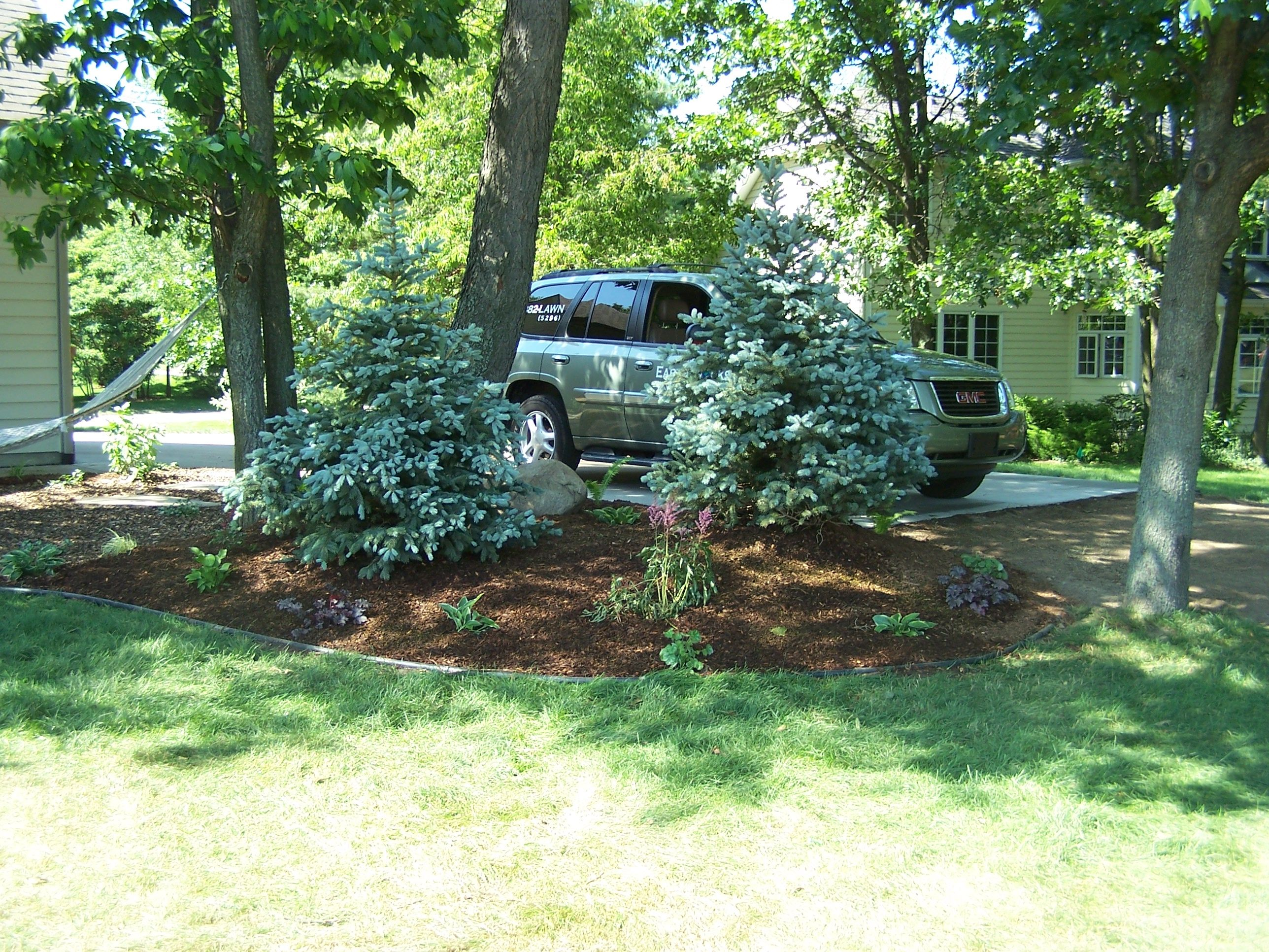 Landscaping Blue Spruce In Landscape For Privacy Portage MI