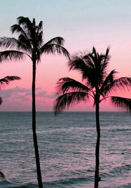 Pretty Sunset Backgrounds Palm Trees