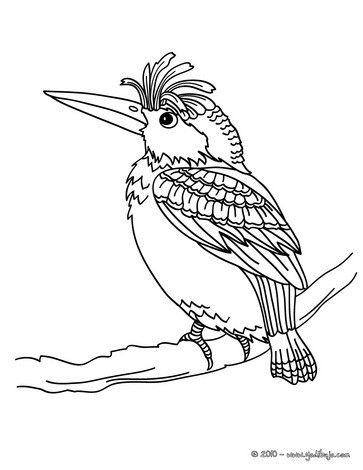 Dibujo para colorear : PAJARO CARPINTERO (gallo de monte