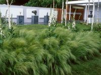 modern / contemporary garden with grasses and silver birch ...