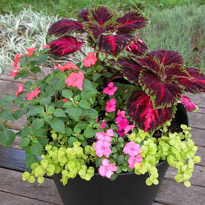 Pretty Potted Plants Container Gardening Flowers Continuity Of
