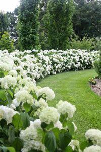 Proven Winners Dream Garden Sweepstakes | Stylish ...