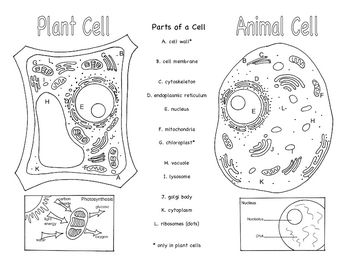 Plant And Animal Cells Brochure Ce 1 Kids Labels Plant