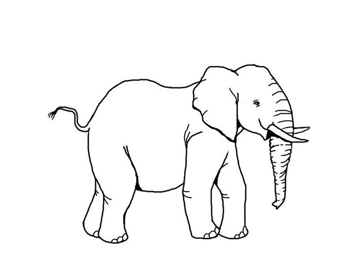 African Animal Template Shapes, Crafts & Colouring Pages