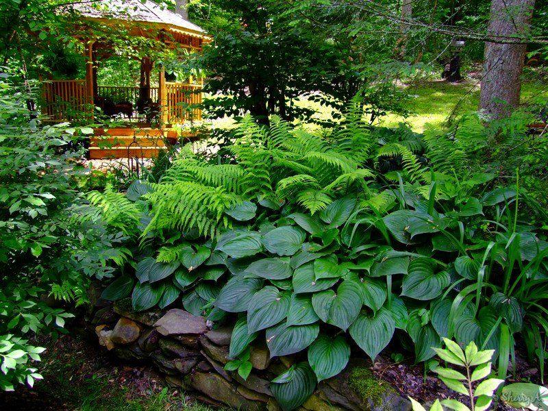 Gazebo In The Secret Garden Gardens Hosta Gardens And Back Gardens
