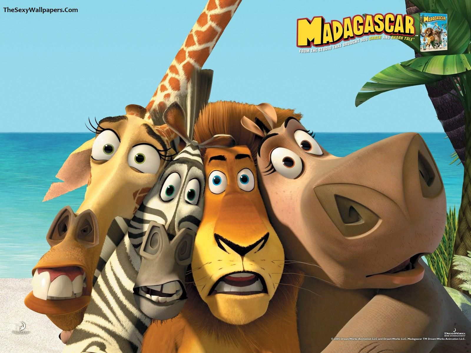 movies madagascar movie wallpapers hd desktop and mobile   hd