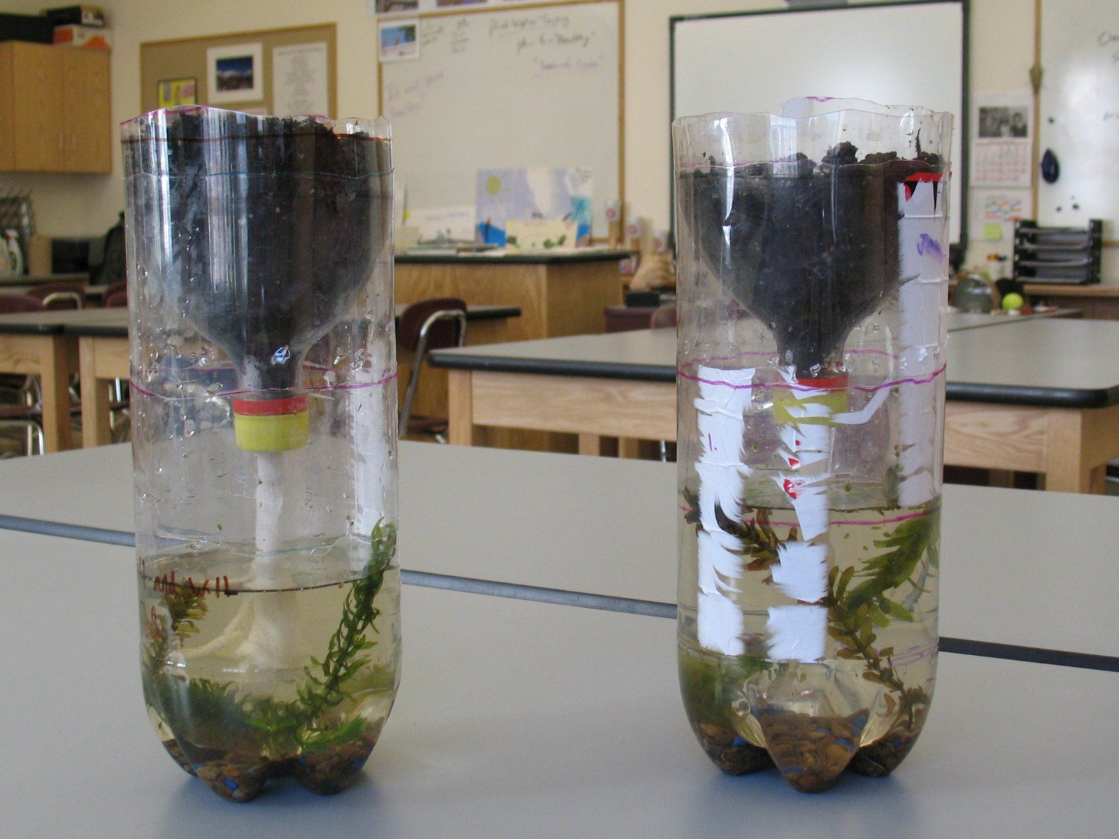 Students Experimenting With Ways To Build Ecosystems In A