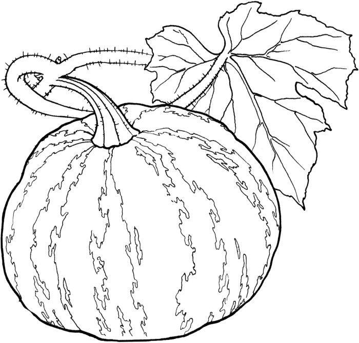 Vegetables Pumpkin Healthy Food Coloring Pages