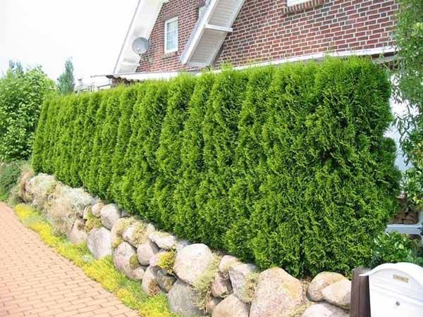 20 Green Fence Designs Plants To Beautify Garden Design And Yard