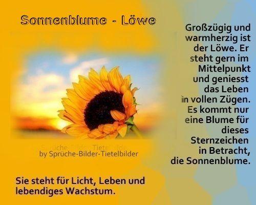Lwe  Sonnenblume  Sprche  Pinterest  Sonnenblumen