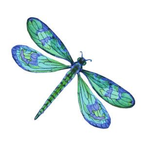 blue dragonfly clipart - google