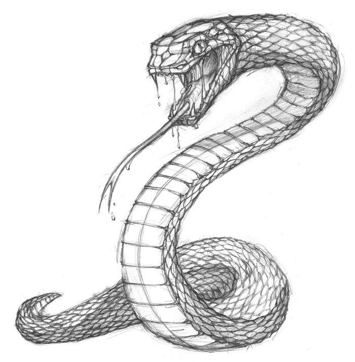 Around Tattoo Wrap Drawings Snake