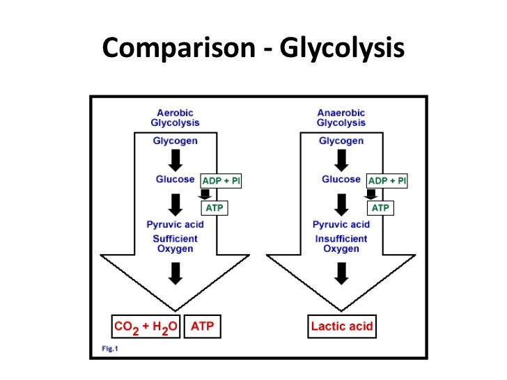 This photo compares slow and fast glycolysis between