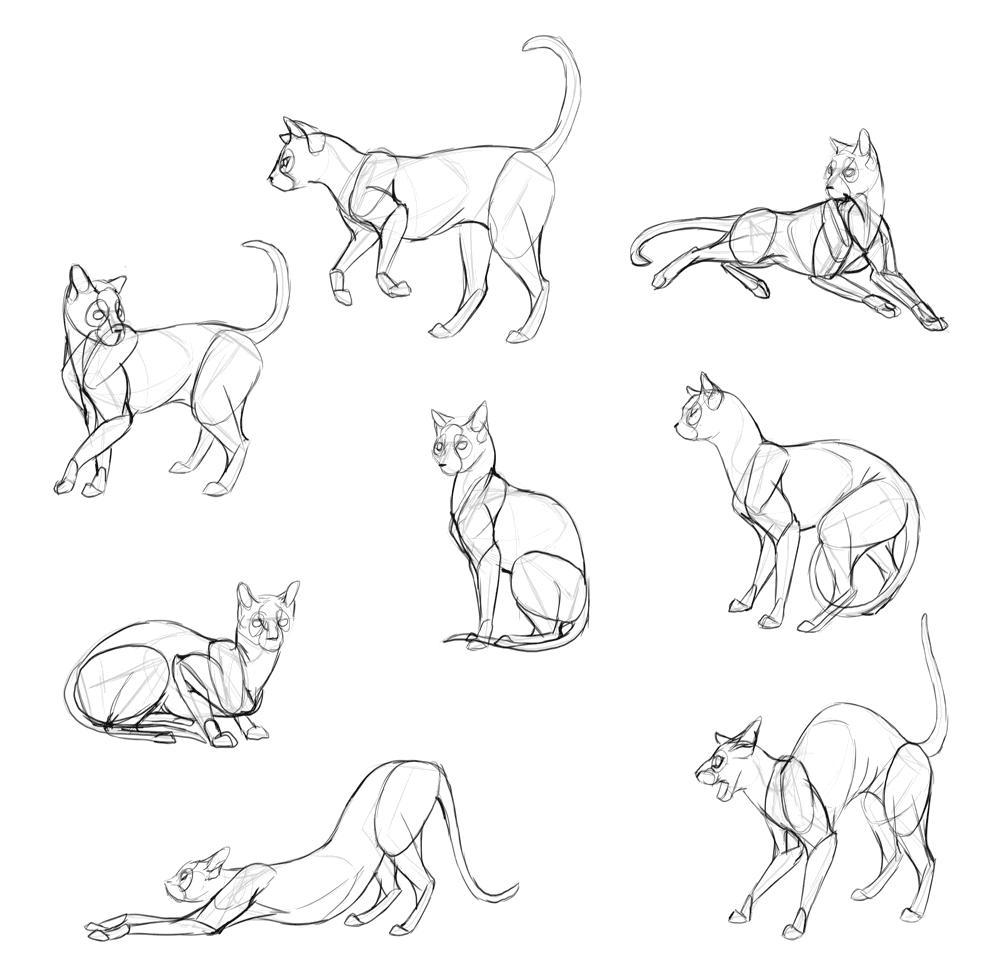 How to Draw Cats: Monika Zagrobelna's Detailed Approach