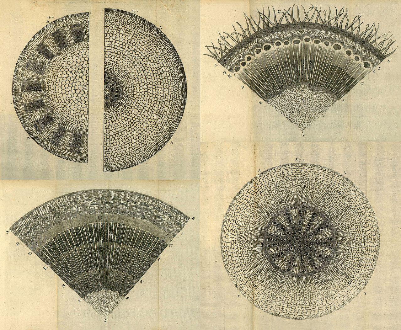 The Anatomy Of Plants Nehemiah Grew