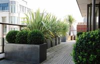 Roof terrace | This is all about Urban Gardening and ...