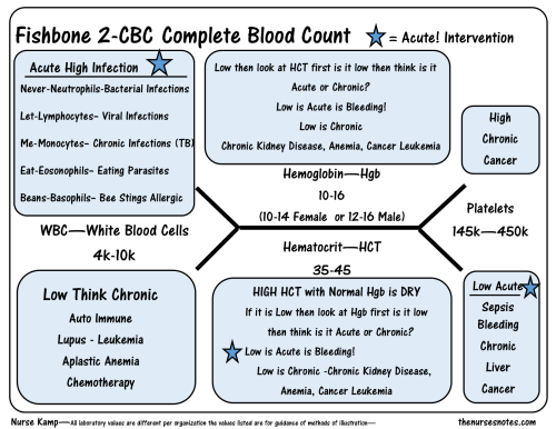 small resolution of the cbc complete blood count diagram