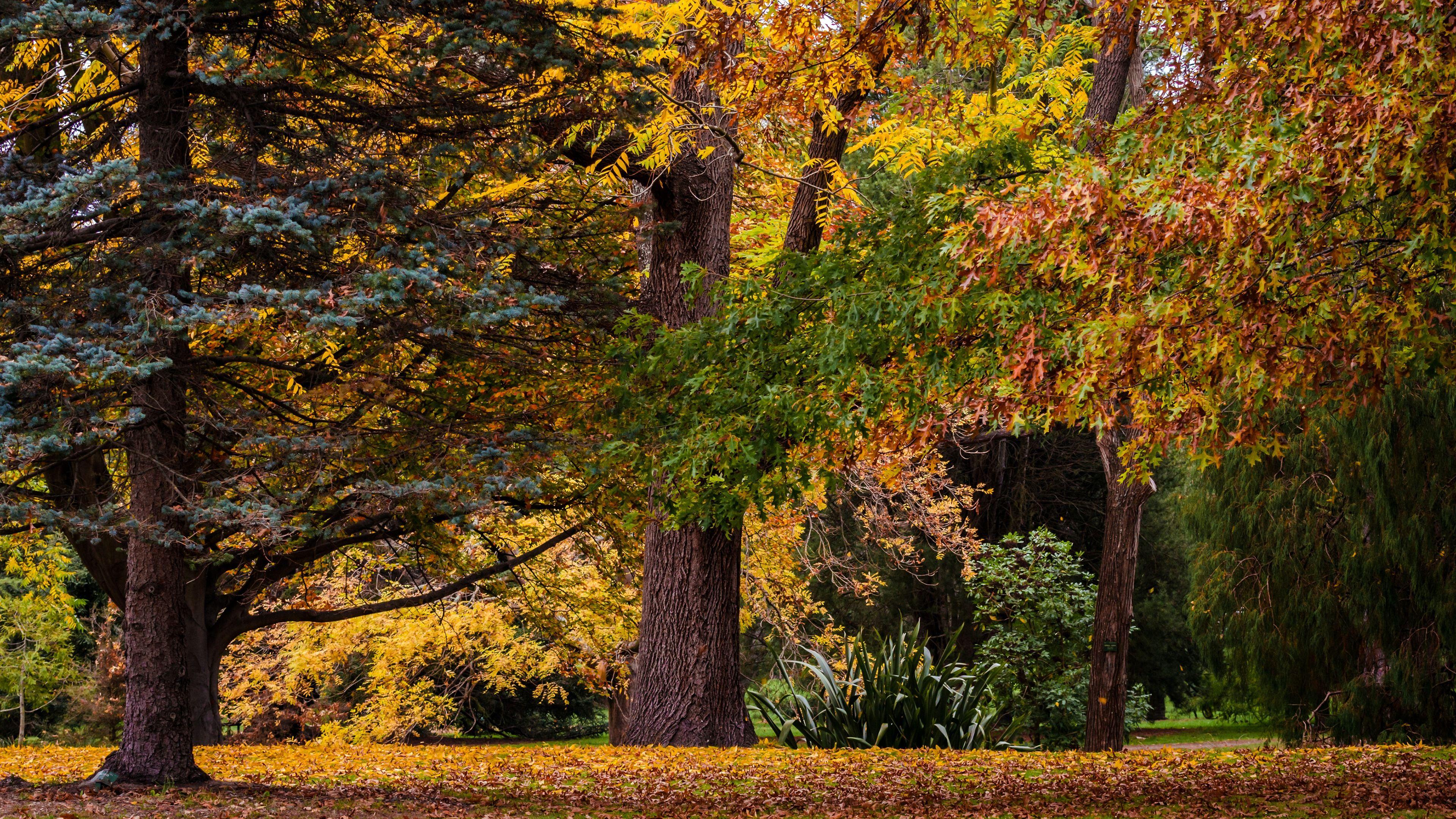 Falling Leaves Landscaping