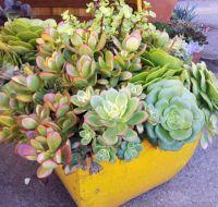 outdoor desert potted succulent arrangements | succulent ...
