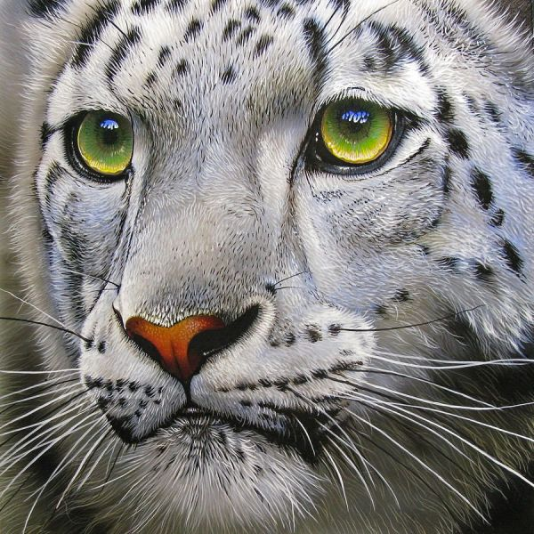Snow Leopard with Green Eyes