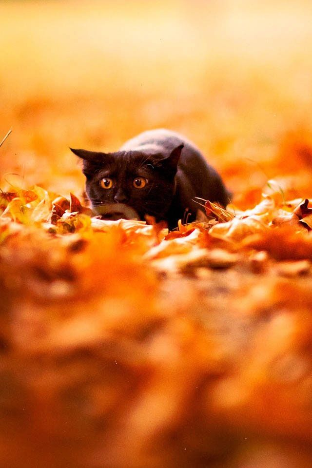 Before I Fall Quotes Iphone Wallpaper Fall Inspired Desktop Backgrounds Leaves Cat And Autumn