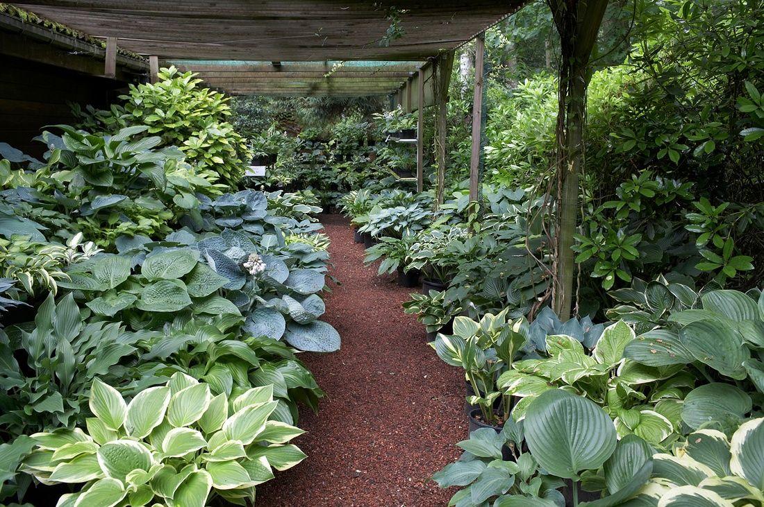Landscape Focused Landscape Garden Design Ideas Hosta