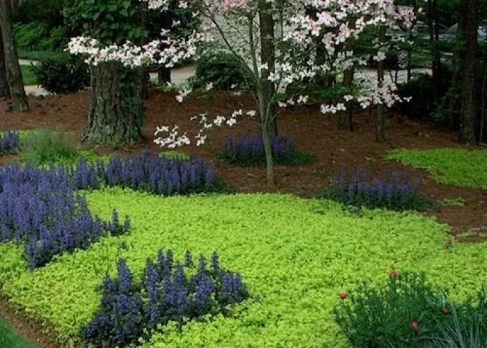 Explore shade garden plants and more also groundcover creeping jenny love