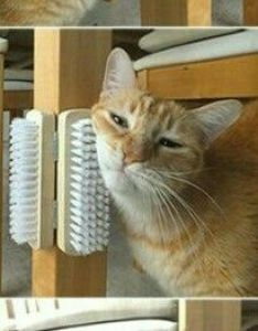 Cool diy scratcher idea for cats also self scratch  brush stations  should do this my dog rh pinterest