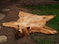 Bear Skin Rug! Yup we really want one to put in front of ...